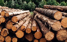 Forest, paper and timber industry